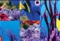 Rakd ki Nemo fotóit!