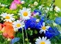 A virágokban sokkal több rejlik a puszta szépségnél, ugyanis mindegyik fajta egyéni értékeket, tulajdonságokat képvisel! Ebből a kvízből megtudhatod, hogy melyik virág áll a legközelebb a te személyiségedhez!