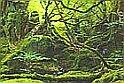 Hidden Objects-Jungle 2