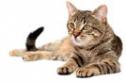 Legújabb kvízünkben a macskákról kérdezünk téged.