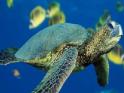 Keresd meg a különbségeket a tenger alatt készült képeken.