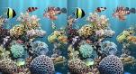 Találd meg a csodálatos tengeralatti felvételeken a különbségeket.