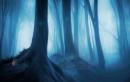 Juss ki a misztikus erdőből. Figyelj nehogy magával rántson!