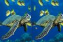 Csodás a víz alatt rejlő világ. Ismerd meg a képeken keresztül!