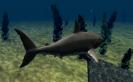 Válj te is egy hatalmas vízalatti ragadozóvá!