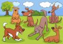 Szereted az állatokat és a különbség keresést? Akkor ezt a játékot is szeretni fogod!
